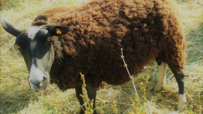 Die Maschen der schwarzen Schafe der Windbranche - DREIECKS-VERTRÄGE